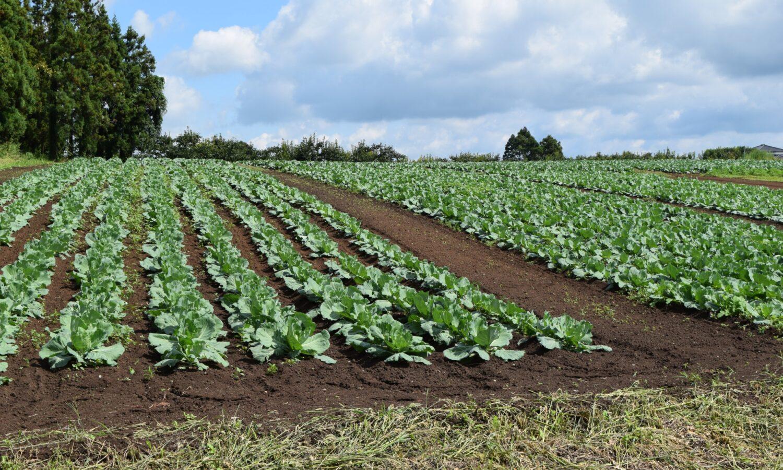 農業での事業再構築補助金の活用